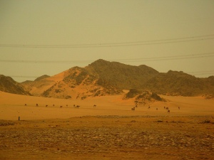 madinah desert